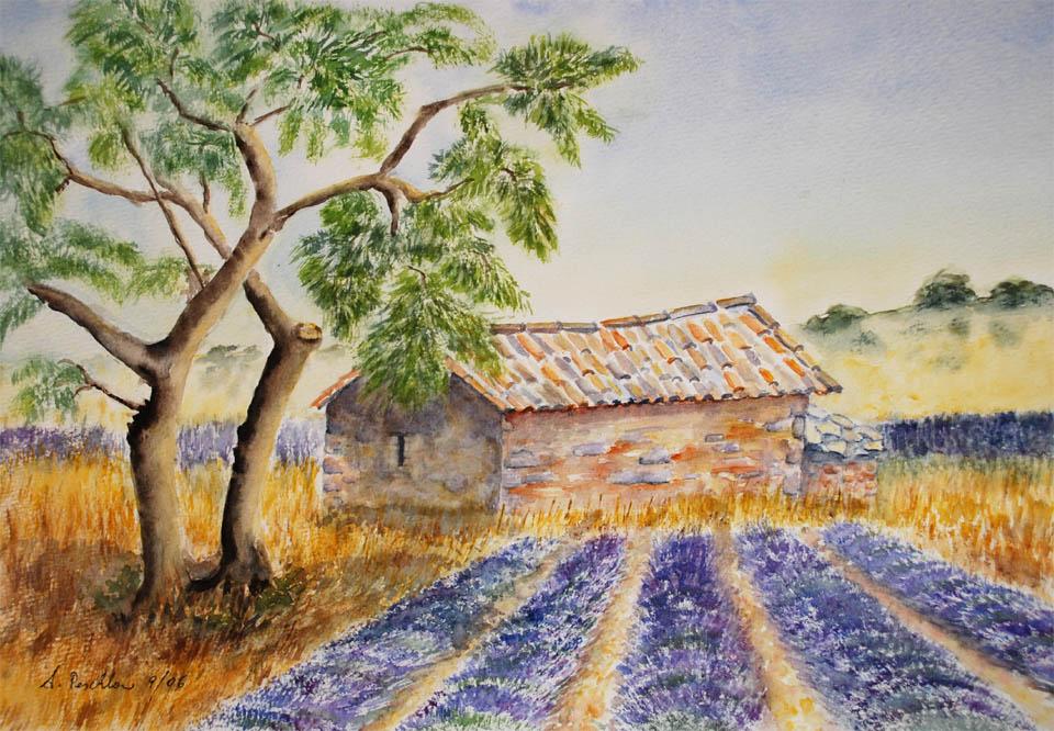 Aqu.Lavendel-u
